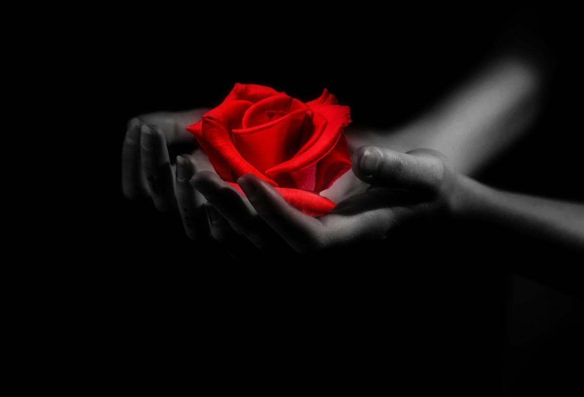 Hände & Rose